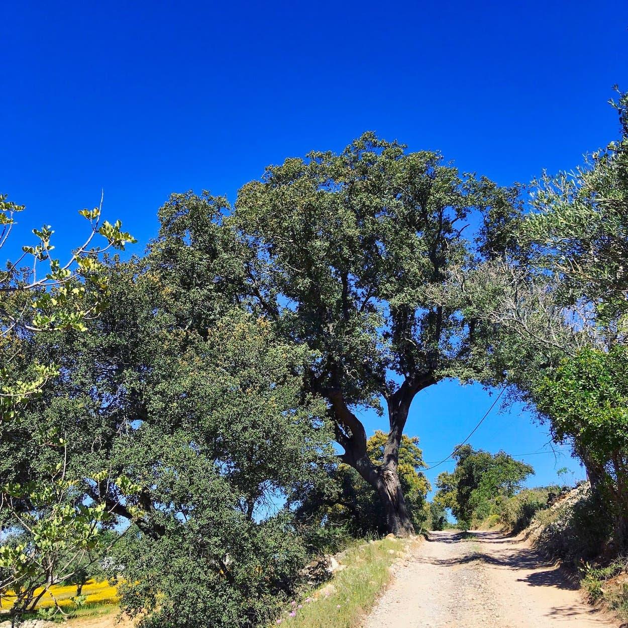 Zalig-Algarve-Casa-Agostos-145-1
