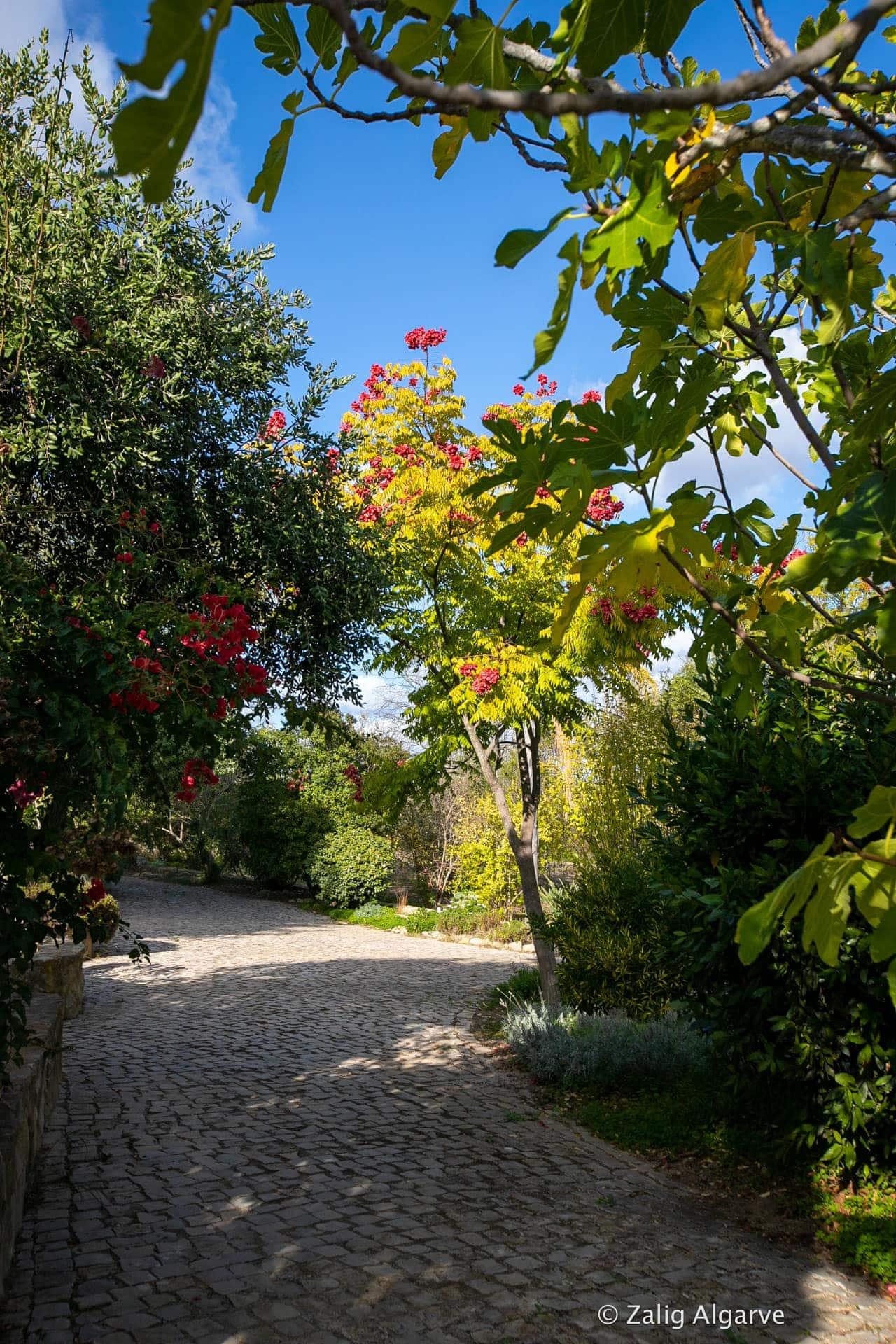 Mil-Arvores-Zalig-Algarve-40_1
