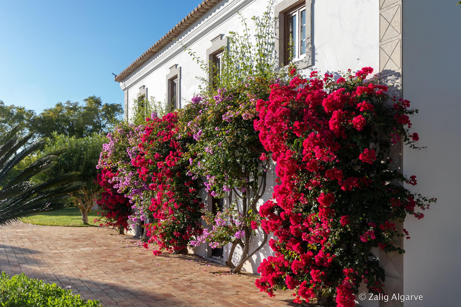 Quinta-do-Guiné-Zalig-Algarve-303