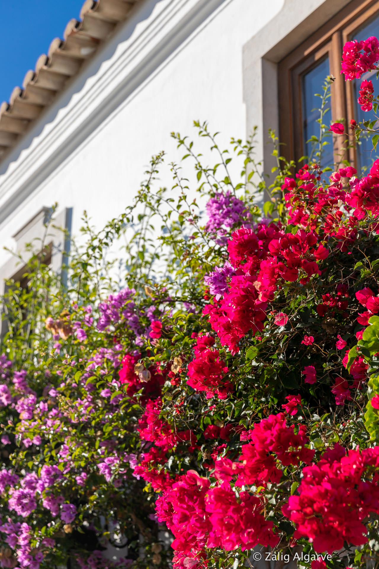 Quinta-do-Guiné-Zalig-Algarve-325